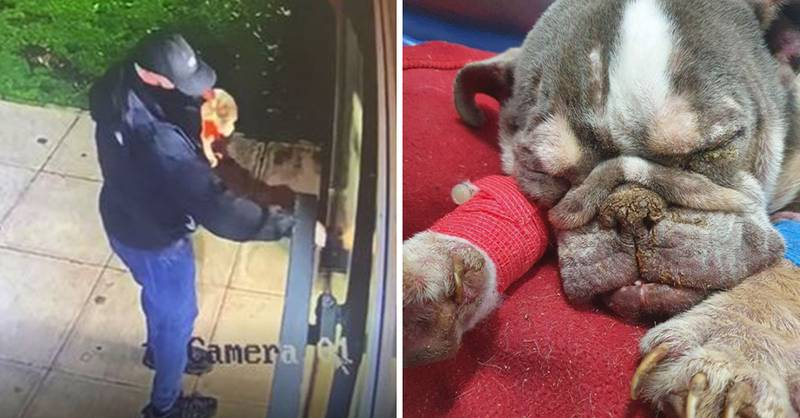 RSPCA Hunting For Person Who Dumped Starving Dog And 'Left It To Die'