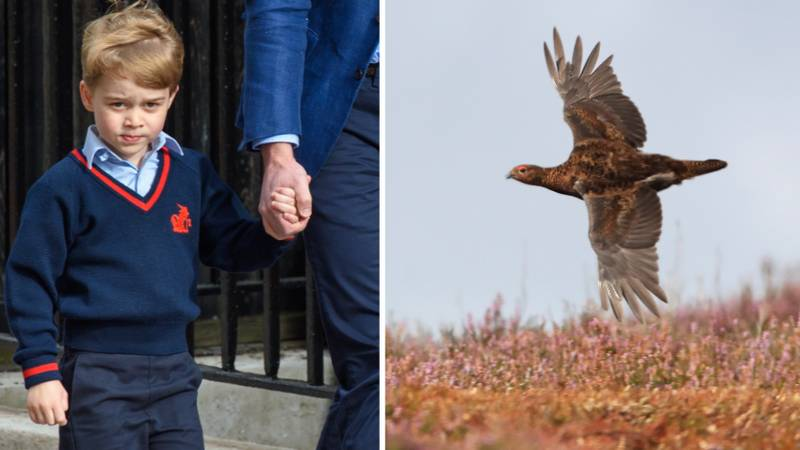 Twitter Isn't Happy That Prince George Was Reportedly Taken Grouse Shooting