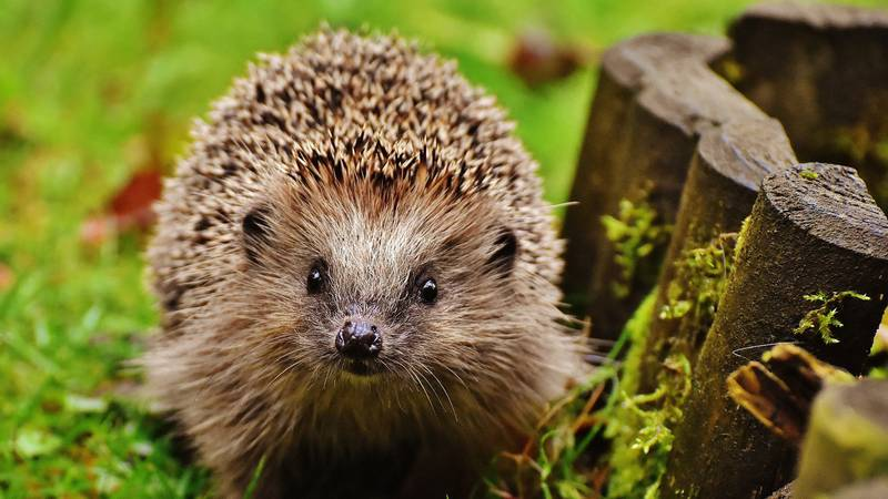 An Animal Rescue Charity Is Demanding A Ban On Aldi's 'Lethal' Hedgehog Houses