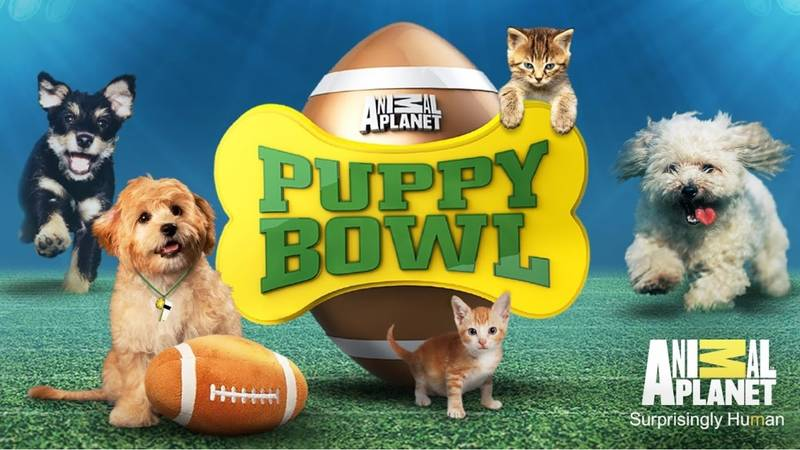 'Puppy Bowl' Is Available To Watch In The UK And It's The Cutest Show Ever