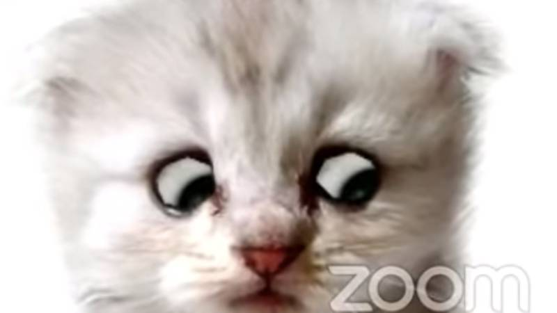 Lawyer Is Forced To Tell Judge He Is Not A Cat In Hilarious Clip As Zoom Filter Gets Stuck
