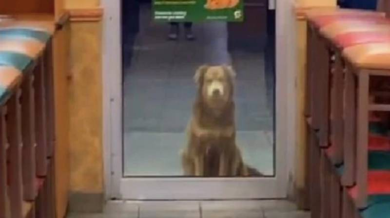 Stray Dog Named 'Subway Sally' Visits Same Store Every Day For Dinner