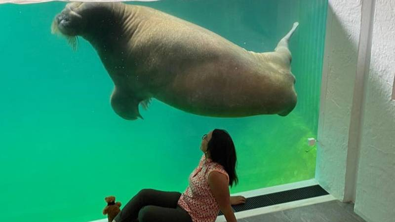 You Can Now Stay In An Underwater Hotel Room With Views Into A Walrus Tank