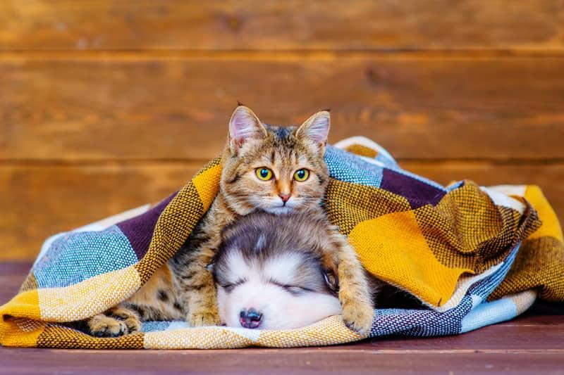 Luna And Bella Top List Of Most Popular Pet Names For 2020
