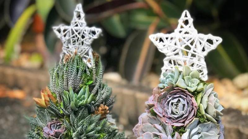 People Are Making Christmas Trees Out Of Succulent Plants