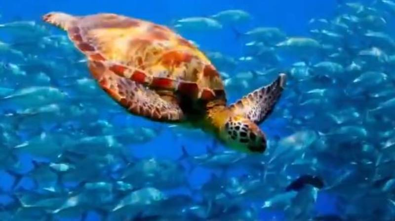 BBC Drops Trailer For New Series Of 'Blue Planet'