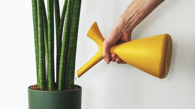 TikTok Hack Proves We've Been Watering Plants Wrong Our Whole Lives