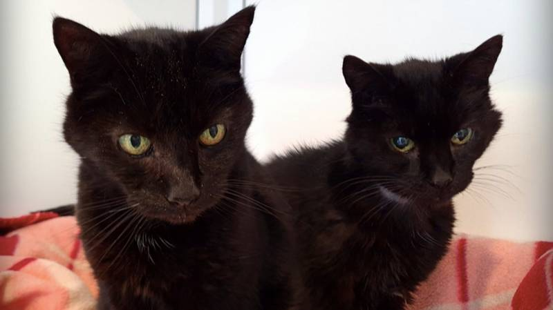 21-Year-Old Brother Cats Looking For Forever Home Together