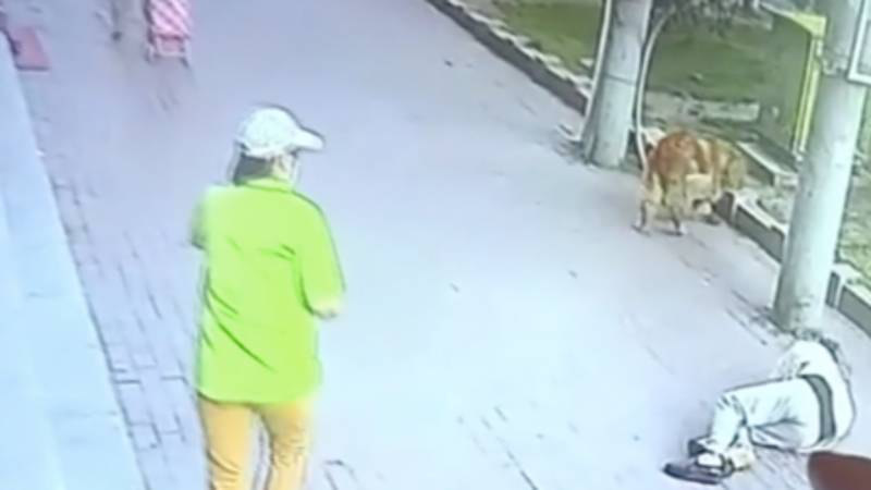 Cat Falls Out Of Sky And Onto Pensioner's Head Knocking Him Unconscious