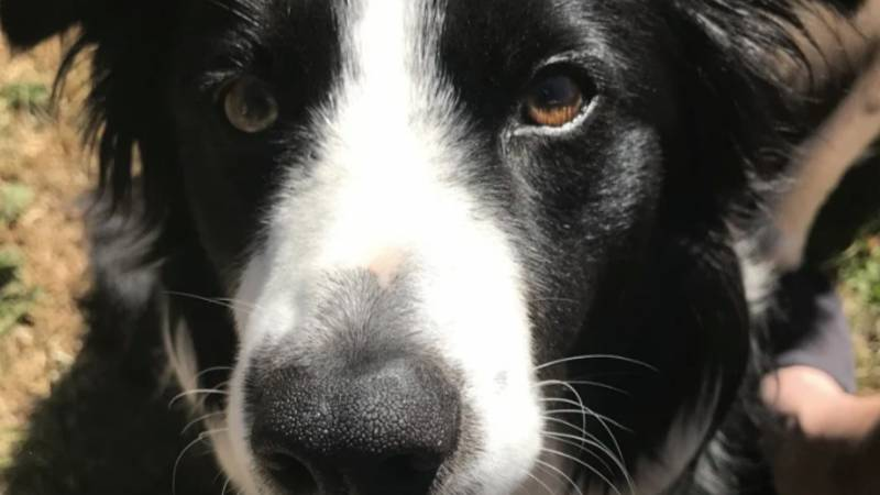 Dog Owner Issues Warning As Pet 'Moments From Death' After Swimming In Pond