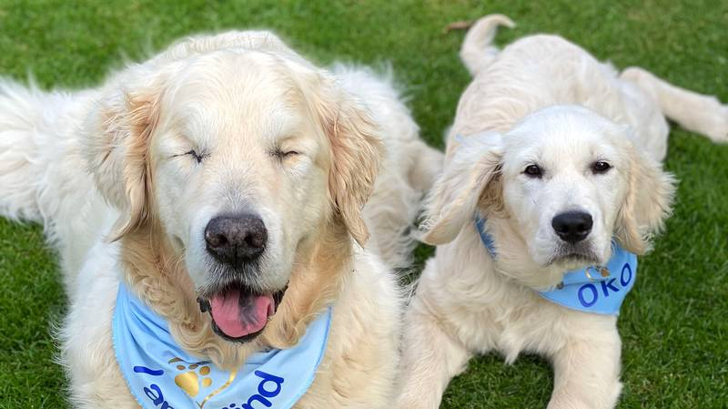 Blind Pooch Has His Very Own Guide Dog Puppy