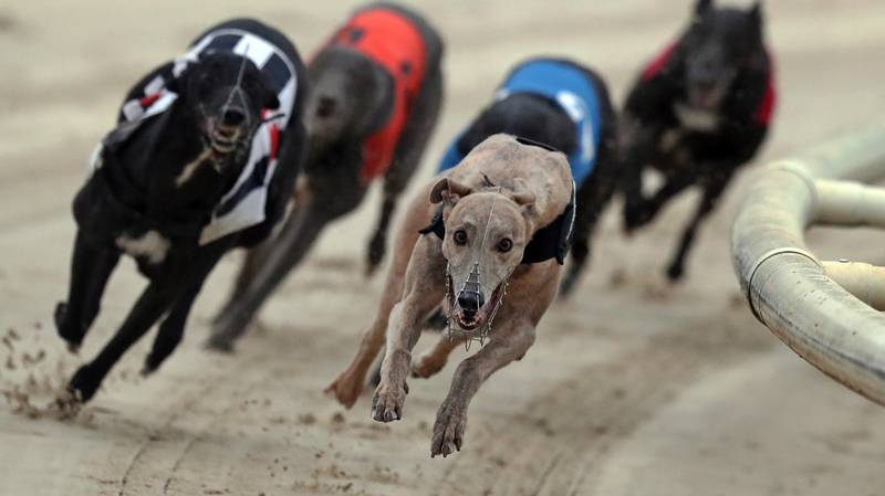 Charities Call For End To Greyhound Racing After Over 500 Deaths In One Year