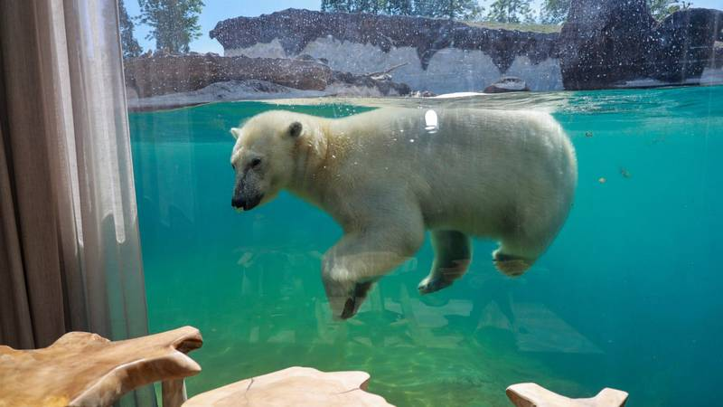 You Can Now Stay In A Hotel Overlooking Polar Bears