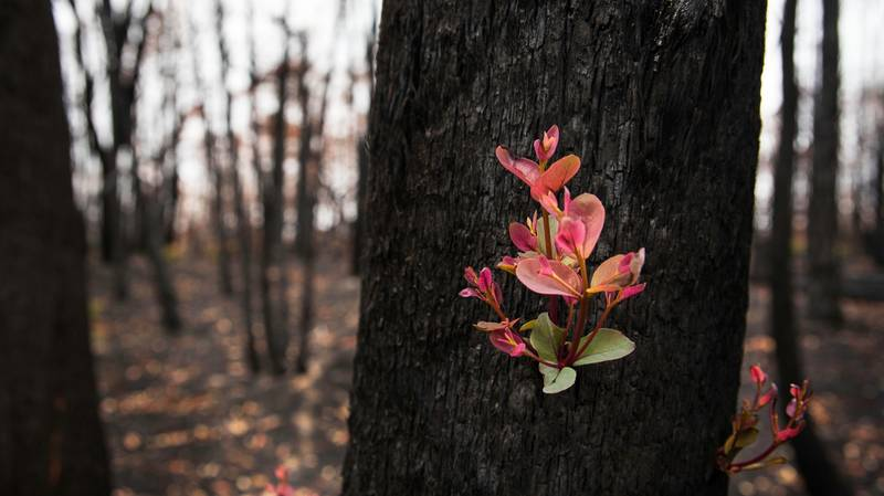 ​Australian Bush Sprouts New Life After Being Destroyed By Horrific Fires