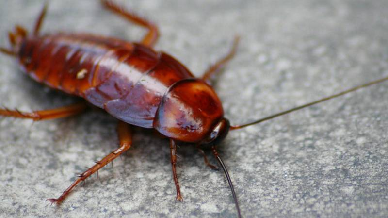 This Zoo Is Letting You Name A Cockroach After Your Ex For Valentine's Day