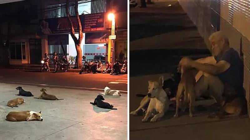 Dogs Chase Ambulance Carrying Owner And Wait Outside Hospital For 24 Hours